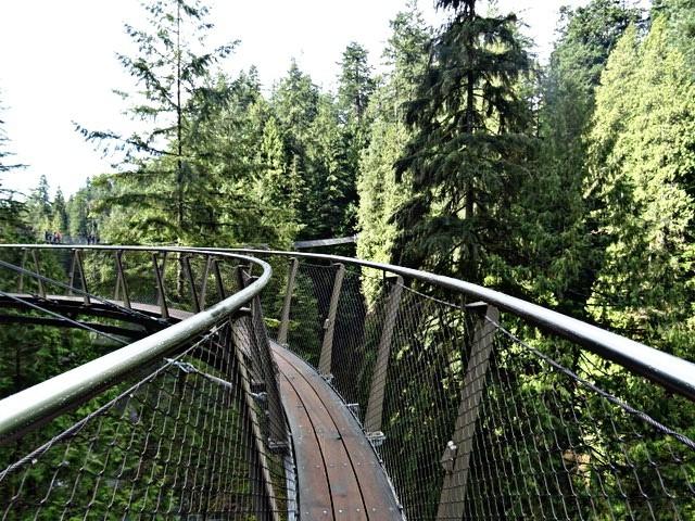 Natur, Brücke, Fotografie