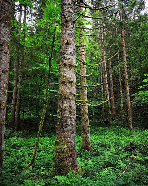 Wald, Baum, Natur, Fotografie