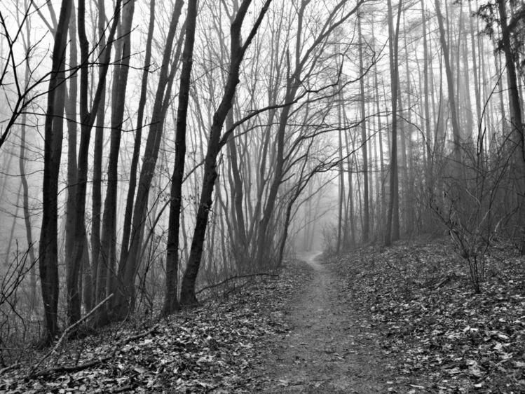 Wald, Natur, Nebel, Fotografie