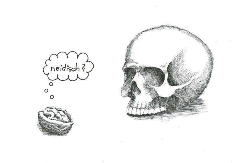 Schädel, Gehirn, Nüsse, Zeichnungen