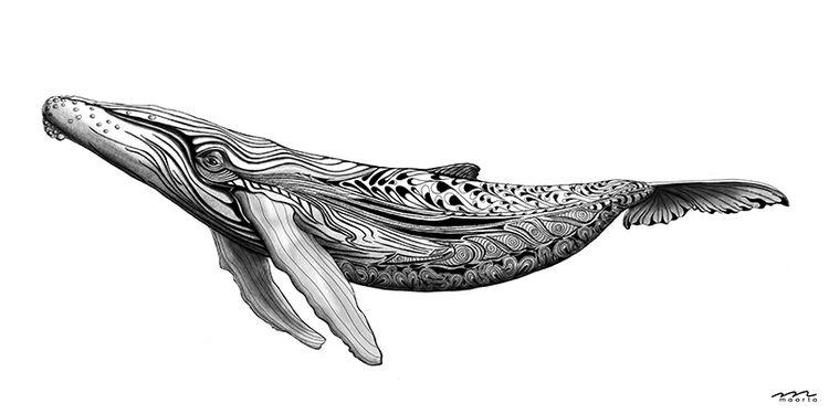 Buckelwal, Tusche, Figural, Meer, Bleistiftzeichnung, Schwarzweiß