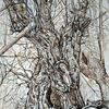 Weide, Sepia, Zeichnung, Waldgeist