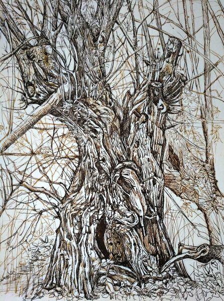 Sepia, Zeichnung, Waldgeist, Weide, Zeichnungen