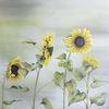Sonnenblumen, Natur, Pflanzen, Blumen