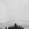 Wald, Schwarz, Weiß, Malerei