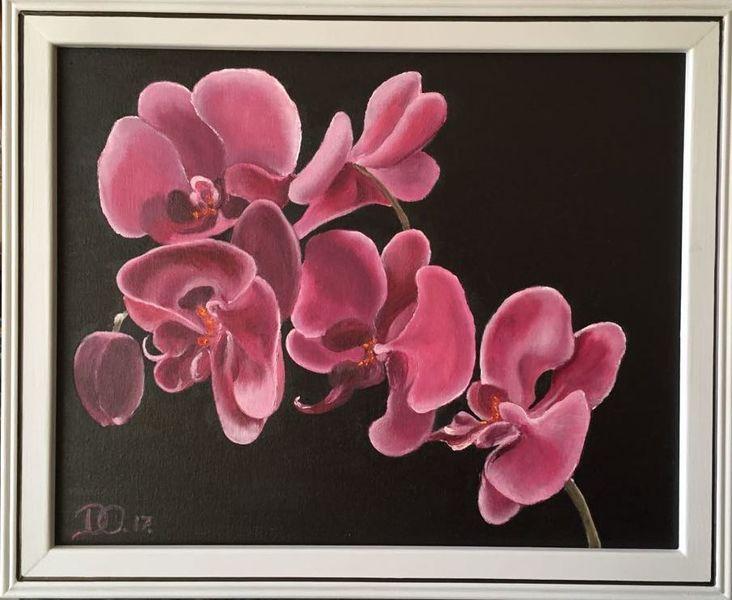 Schwarz, Blumen, Orchidee, Pink, Ölmalerei, Rosa