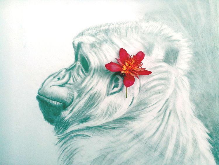 Zeichnung, Portrait, Gorilla, Zeichnungen, Tropfen