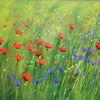 Mohnblumen, Wiese, Klatschmohn, Blumenwiese