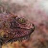 Echse2, Tierportrait, Airbrush, Malerei
