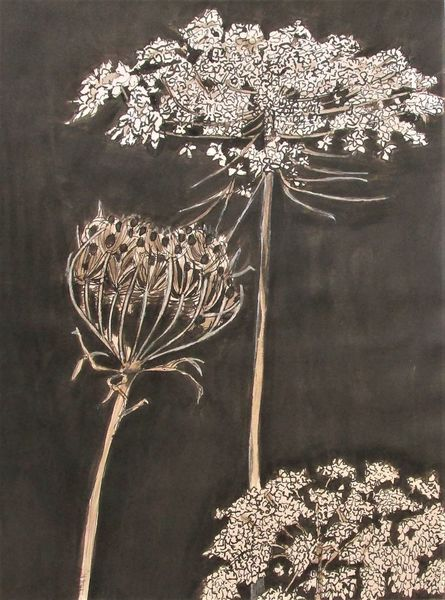 Zeichnung, Blumen, Wilde möhre, Tuschmalerei, Zeichnungen, Wilde