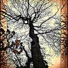 Fotografie, Baum, Natur, Digital