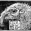 Kopf, Vogel, Linolschnitt, Pute