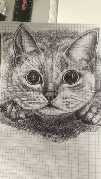 Katze, Kugelschreiber auf zeichnungspapier, Zeichnungen