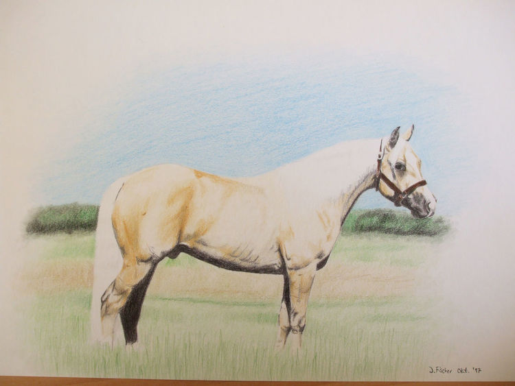 Quarter horse, Pferde, Buntstiftzeichnung, Zeichnungen