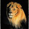 Tiere, Löwe, Wild, Zeichnungen