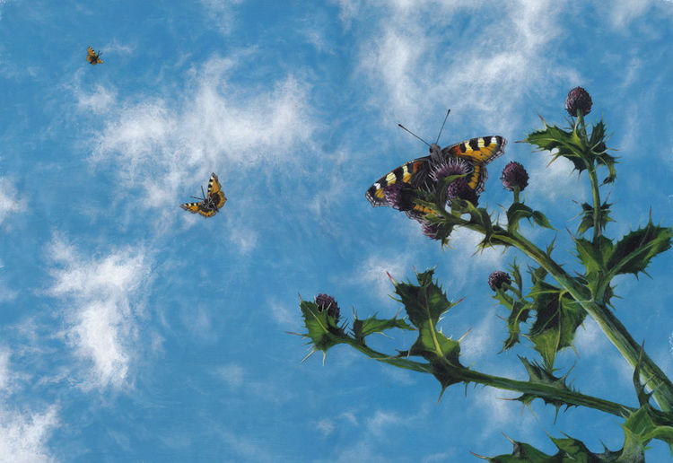 Pflanzen, Wolken, Acrylmalerei, Malerei, Natur, Schmetterling