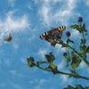 Malerei, Schmetterling, Natur, Wolken