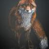 Schwarz, Orange, Fuchs, Rot