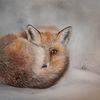 Fuchs, Flauschig, Fell, Pastellmalerei