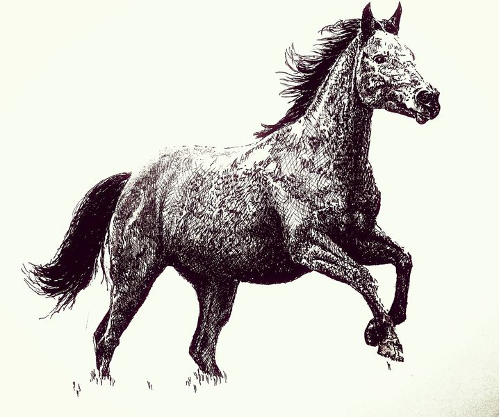 Illustration, Pferde, Galopp, Illustrationen
