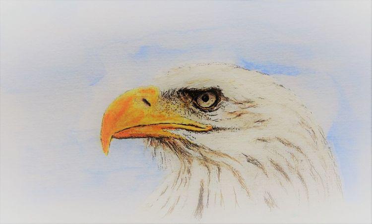 Tiere, Augen, Seeadler, Kopf, Zeichnungen
