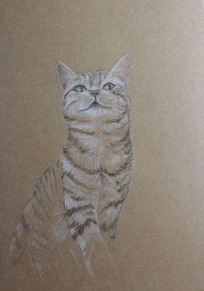 Zeichnung, Katze, Tiger, Tiere, Zeichnungen