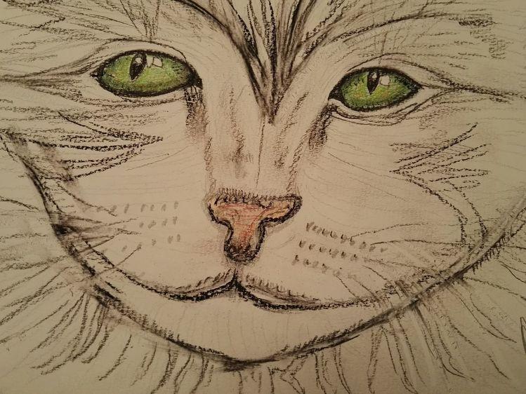 Zeichnung, Katze, Zeichnungen,