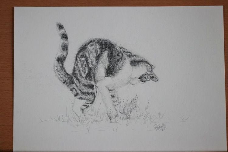 Maus, Spiel, Jagd, Katze, Bleistiftzeichnung, Zeichnungen