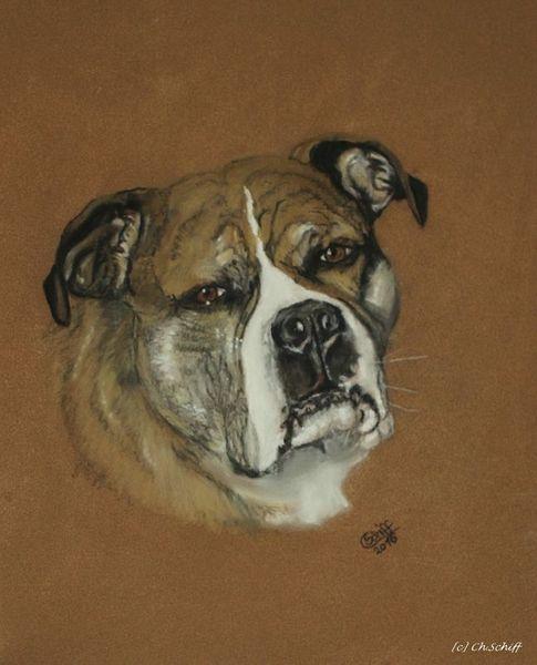 Hund, Pastellmalerei, Terrier, American staffordshire terrier, Zeichnungen