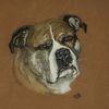 American staffordshire terrier, Hund, Terrier, Pastellmalerei