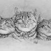 Bleistiftzeichnung, Katze, Tierportrait, Zeichnungen