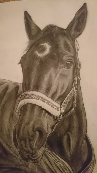 Tiere, Pferde, Natur, Zeichnungen