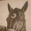 Pferde, Natur, Tiere, Zeichnungen