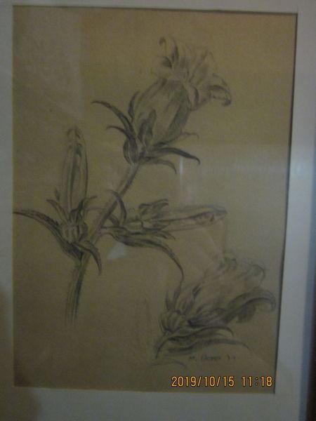 Weiß, Blumen, Schwarz, Zeichnungen, Studie