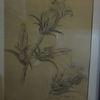 Schwarz, Weiß, Blumen, Zeichnungen