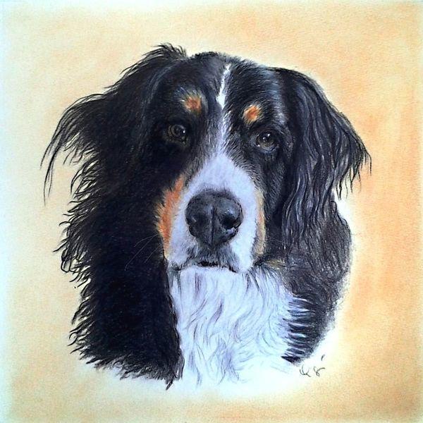 Hund, Buntstiftzeichnung, Zeichnung, Zeichnungen
