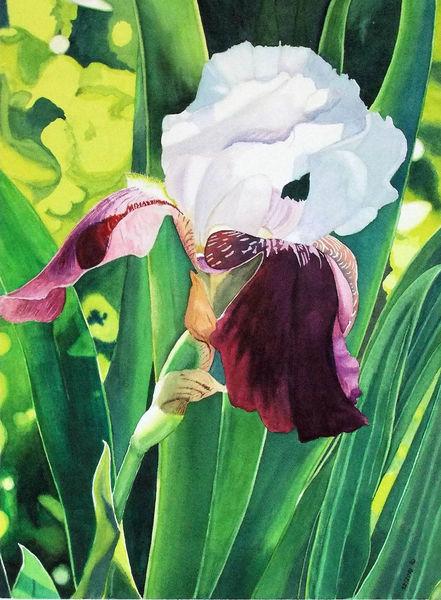 Aquarellmalerei, Blumen, Iris, Aquarell, Blätter, Obst
