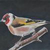 Singvogel, Äste, Stieglitz, Zeichnungen