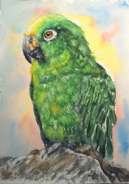 Papagei, Grüner papagei, Amazonenpapagei, Tierportrait, Grüner vogel, Tiere