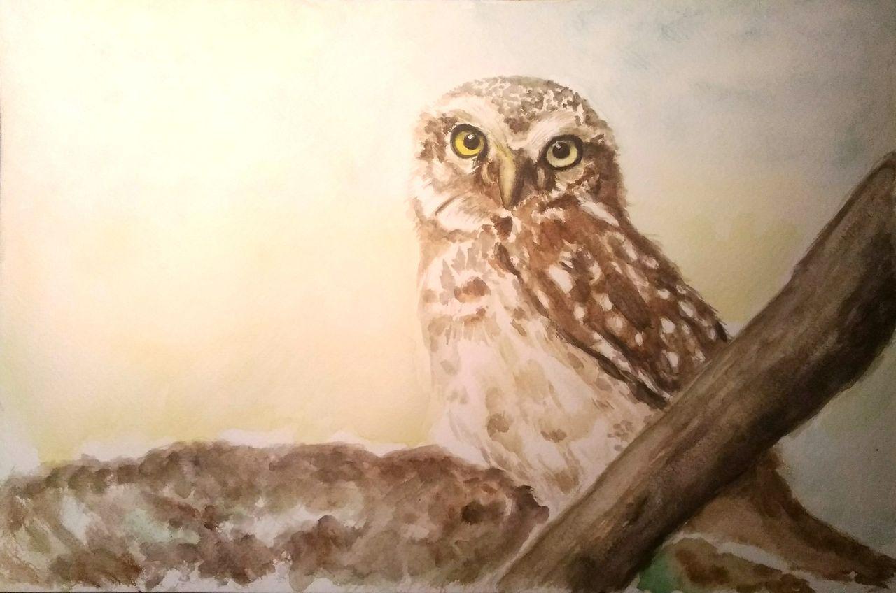 eule  tierportrait tiere baum vogel von vinci bei kunstnet