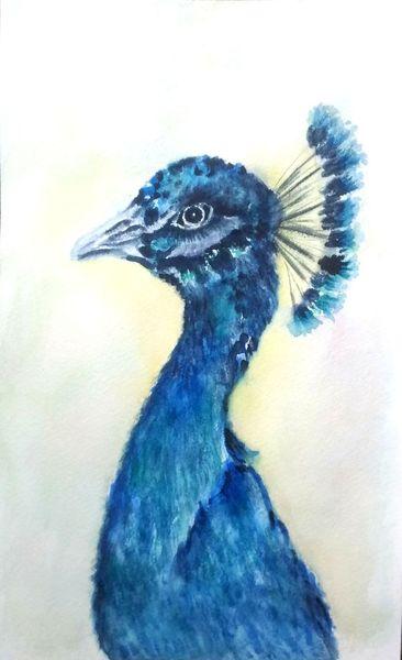 Vogel, Aquarellmalerei, Pfau, Tierportrait, Tiere, Blau