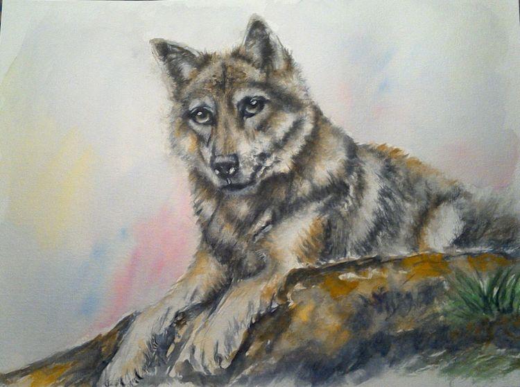 Wolf, Natur, Aquarellmalerei, Raubtier, Tierportrait, Tiere