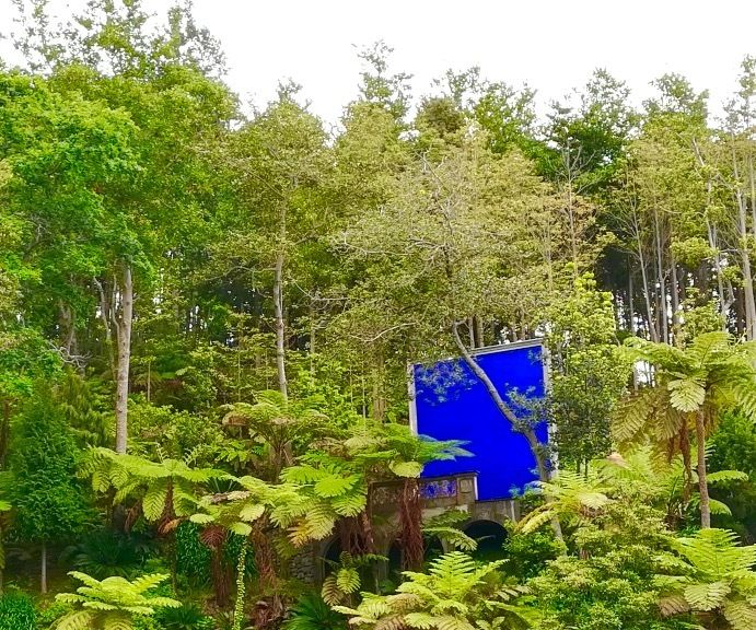 Reise, Blumen, Blau, Phantastik, Natur, Fotografie