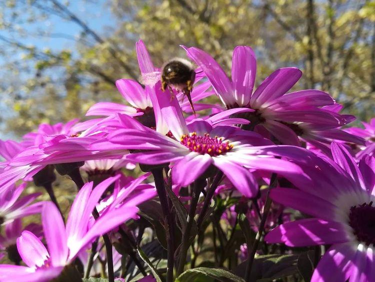 Blumen, Fotografie, Primavera, Biene, Natur