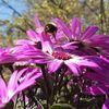 Natur, Biene, Blumen, Fotografie