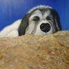 Hund, Hirtenhund, Acrylmalerei, Portrait