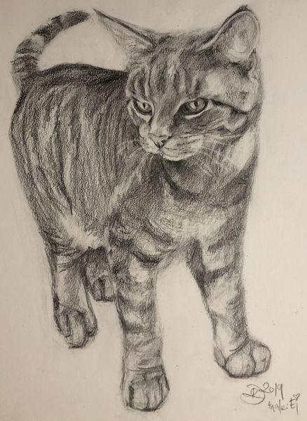 Bleistiftzeichnung, Katze, Skizze, Malerei, Tiere, Zeichnungen