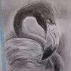 Vogel, Flamingo, Kohlezeichnung, Zeichnungen