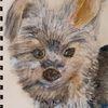Aquarell stift, Hund, Rocky, Zeichnungen