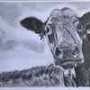 Tiere, Kuh, Bleistiftzeichnung, Zeichnungen